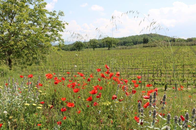 Tuscany natur royaltyfri bild
