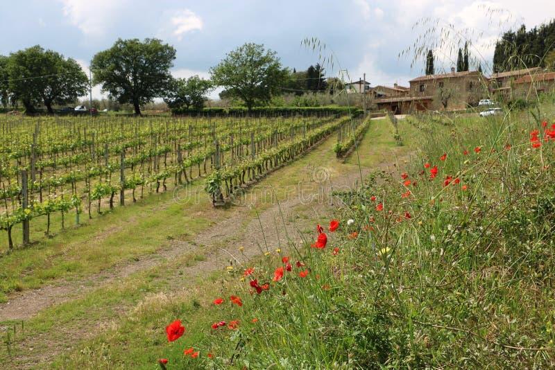 Tuscany natur royaltyfria foton