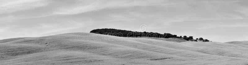 Tuscany panoramy pola BW i wzgórza fotografia stock