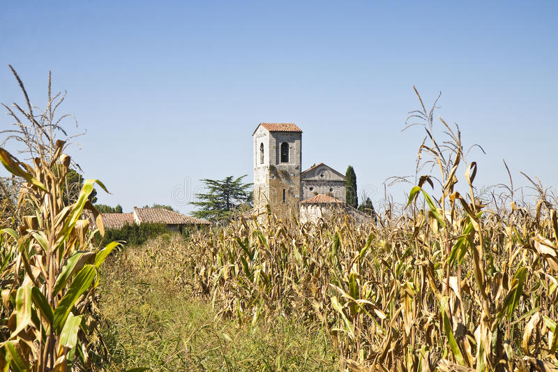 Tuscany Romanesque church immersed in a corn field royalty free stock images