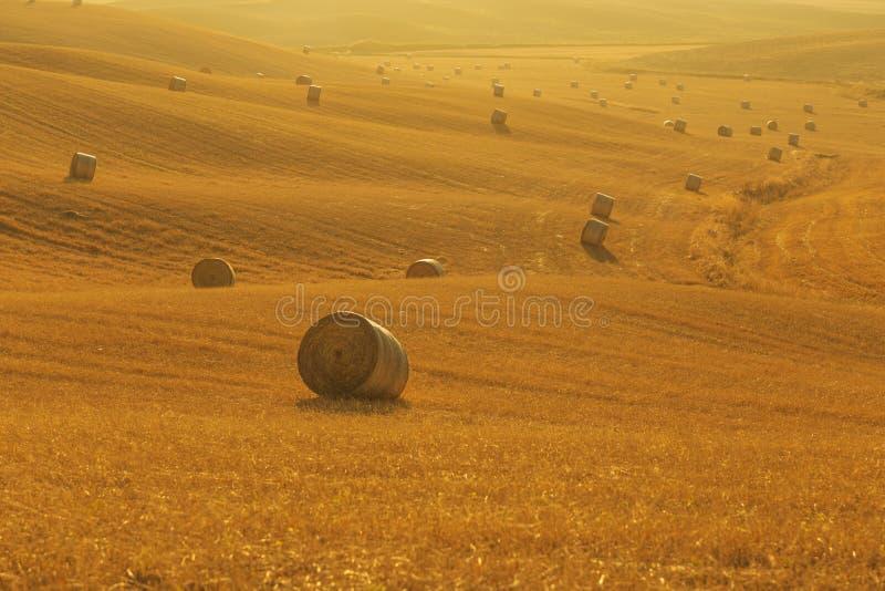 Tuscany rural landscape, Italy stock image