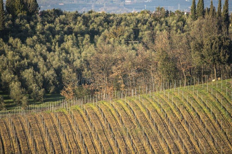 Tuscany ` s kraj w zimie i winnicy, przy zmierzchem zdjęcie stock