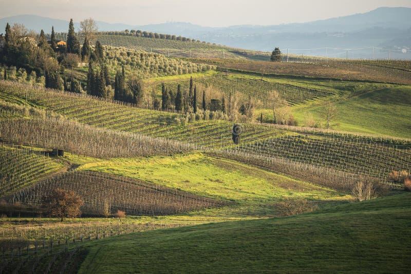 Tuscany ` s kraj w zimie i winnicy, przy zmierzchem obraz royalty free