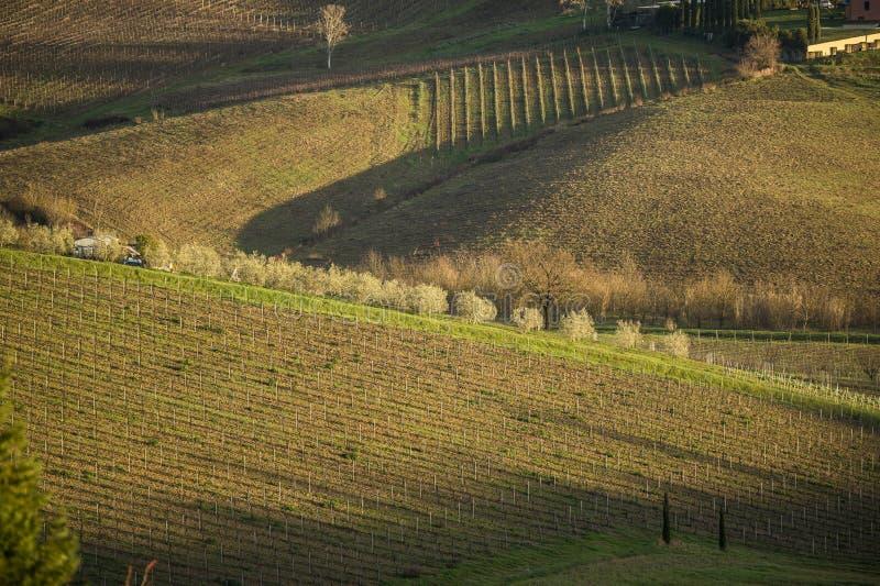 Tuscany ` s kraj w zimie i winnicy, przy zmierzchem zdjęcia royalty free