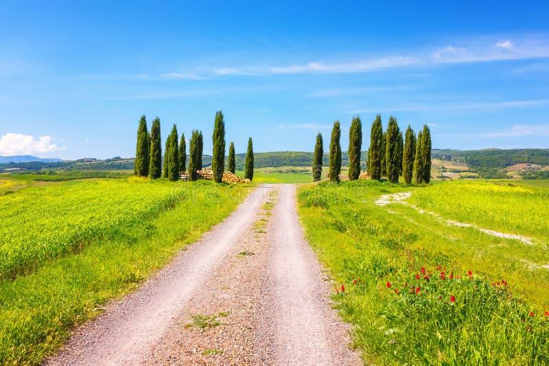 Tuscany at spring royalty free stock photo