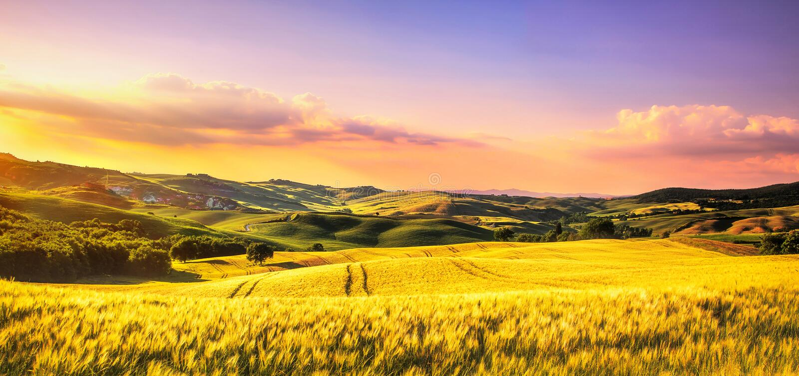 Tuscany spring, rolling hills at sunset. Rural landscape. Whaet, green fields and trees Italy stock photo
