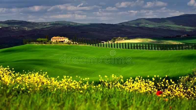 Tuscany in the spring time with green fields and yellow flowers stock photography