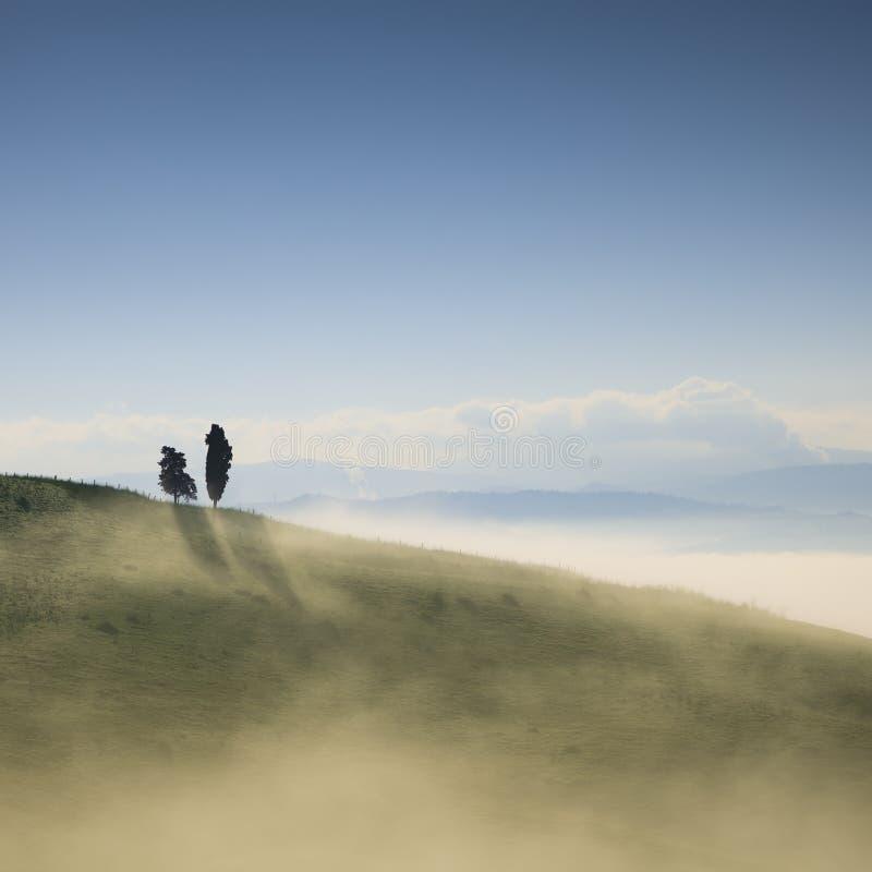 Tuscany, två ensamma träd och dimma Volterra Italien arkivfoton