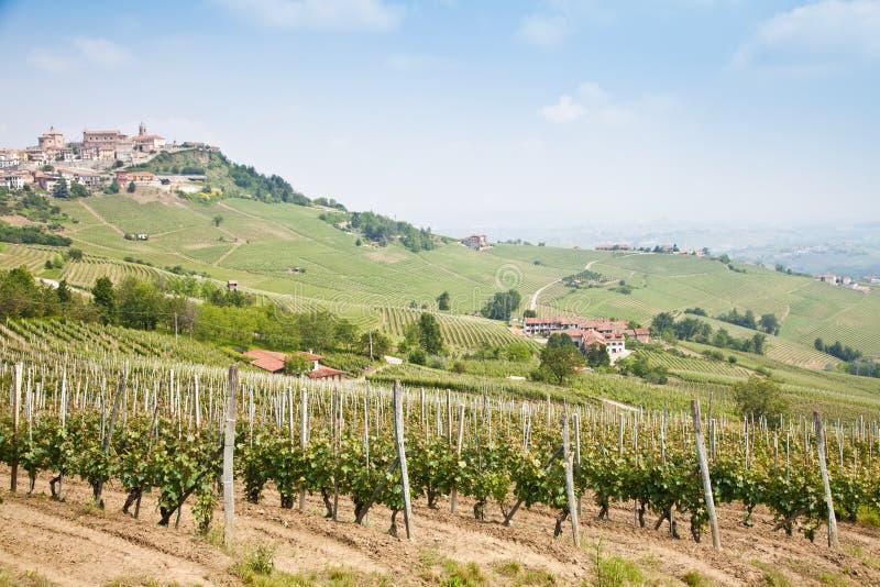 Tuscany Vineyard Stock Photos