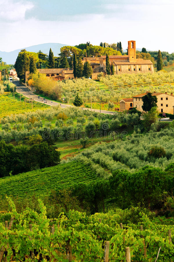 Tuscany Vineyard in Harvest Season royalty free stock images