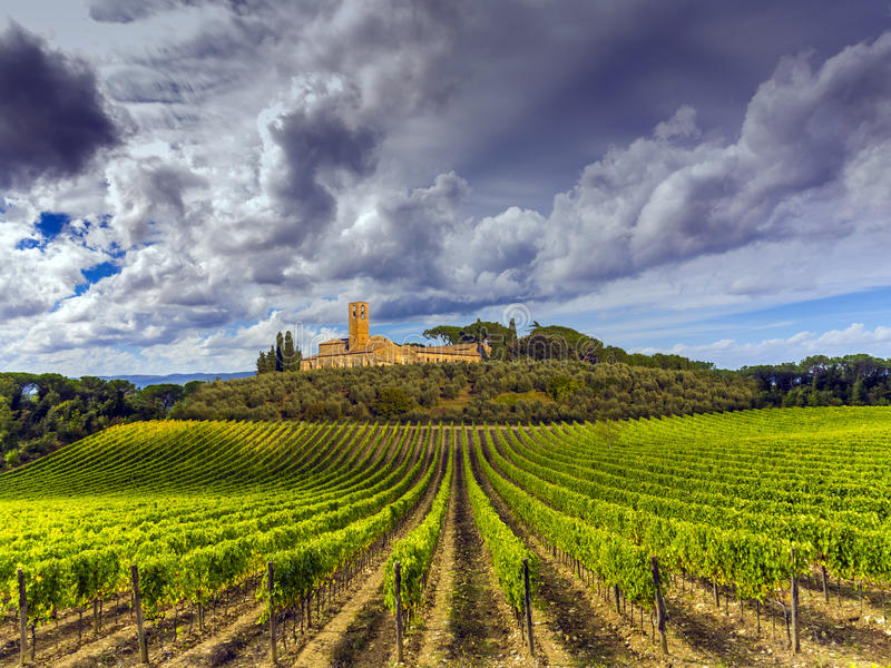 Download Tuscany Vineyards Countryside Stock Photo - Image: 38901924