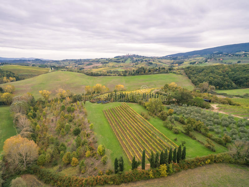 Download Tuscany vineyards stock image. Image of color, countries - 83721127