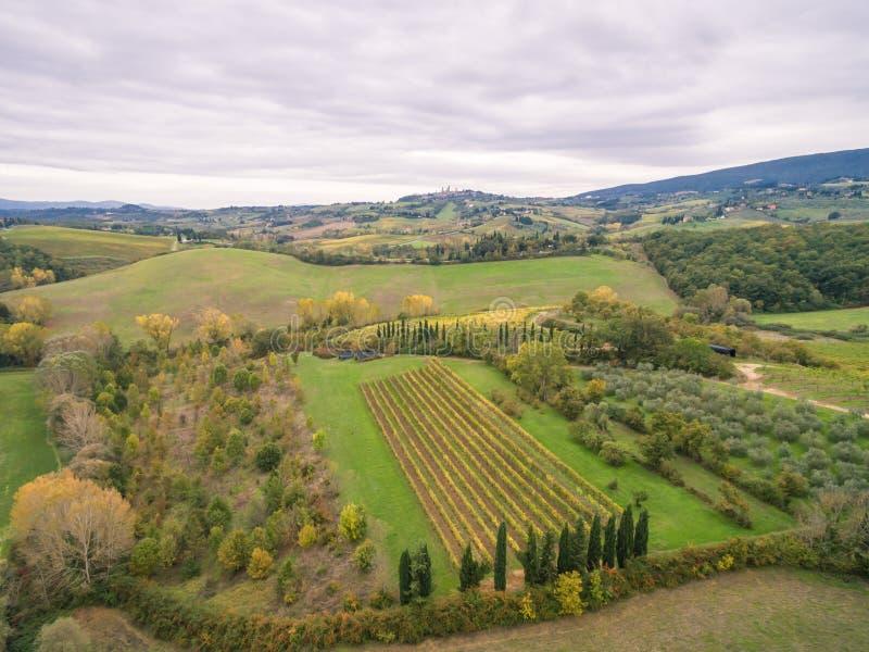 Tuscany vineyards. Near San Gimignano royalty free stock photography