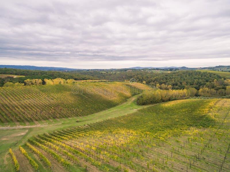 Tuscany vineyards. Near San Gimignano royalty free stock photo
