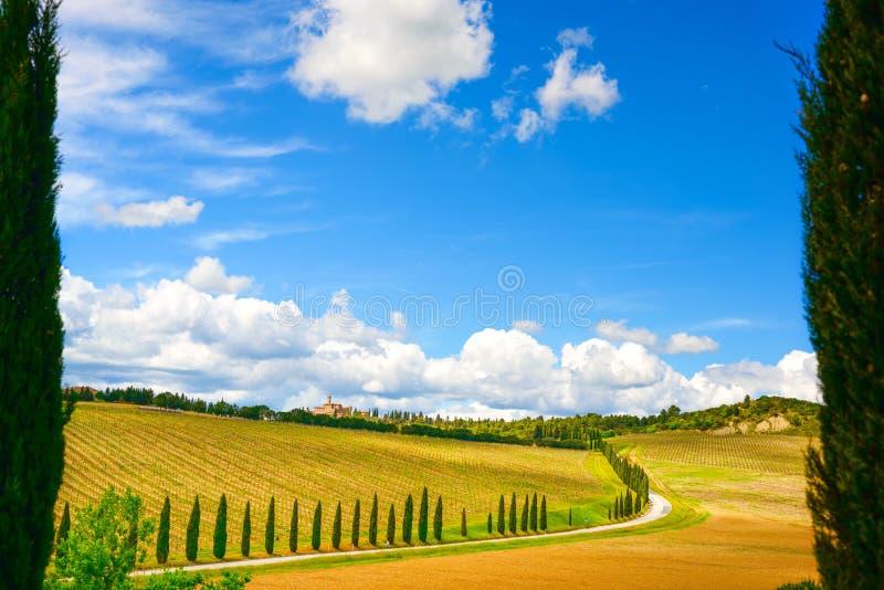 Tuscany, vingård, cypressträd och väg, lantligt landskap, Ital royaltyfri fotografi