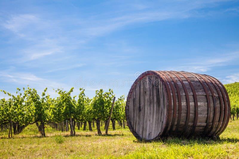 Tuscany wineyard royalty free stock images