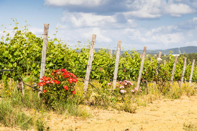 Tuscany Wineyard stock photo