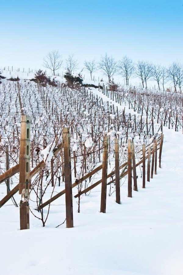Tuscany: wineyard in winter royalty free stock photography