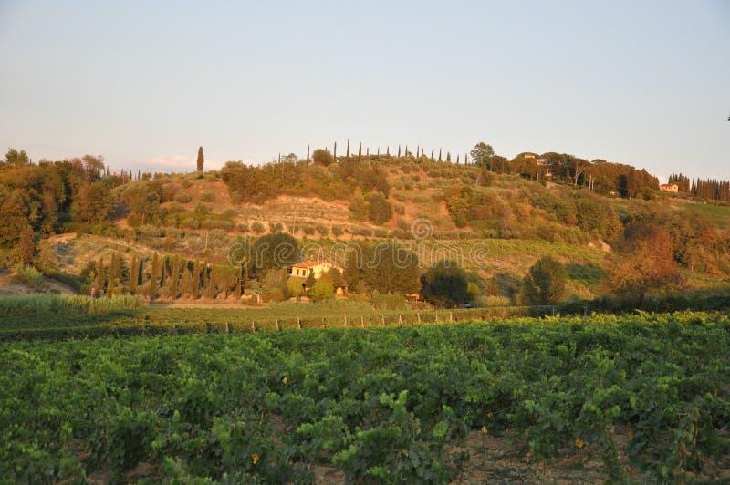 Tuscany winniców szczyt przy San miniato obraz stock