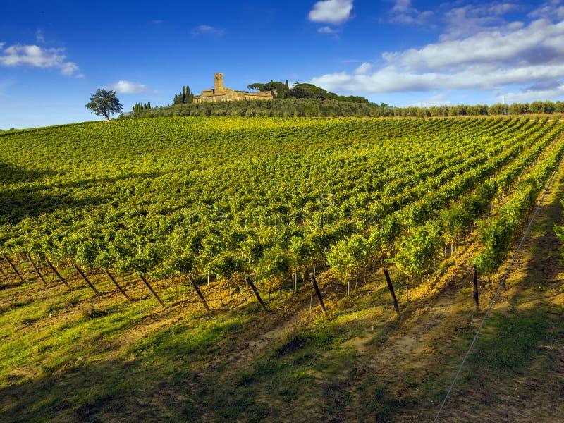 Tuscany winniców wieś obrazy royalty free