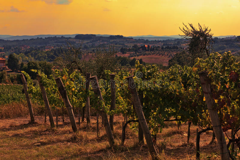 tuscany winnica fotografia stock