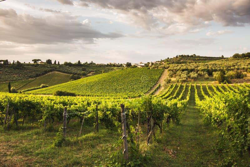 Tuscany winnicy zdjęcie stock