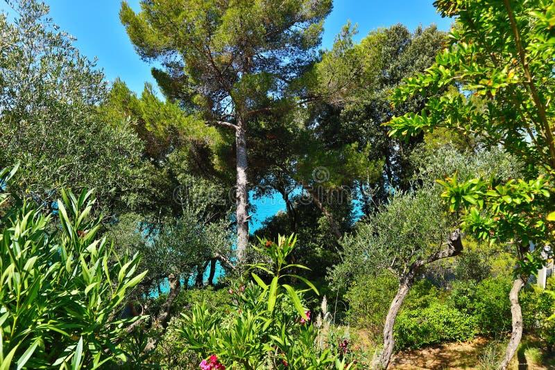 Tuscany zielona piękna natura zdjęcia stock