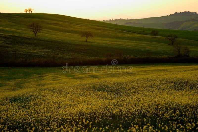 Tuscany zmierzch obraz stock