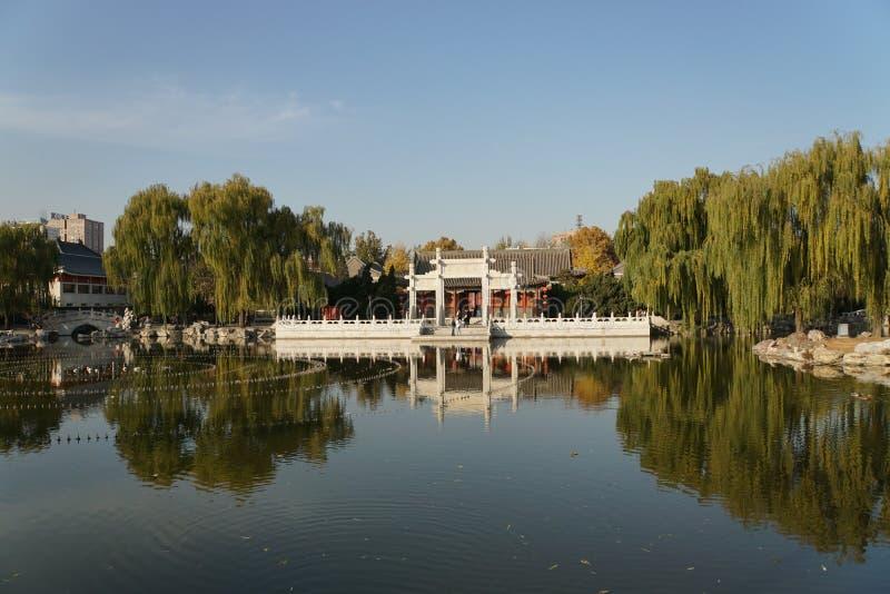 Tusen dollar beskådar trädgården royaltyfria foton
