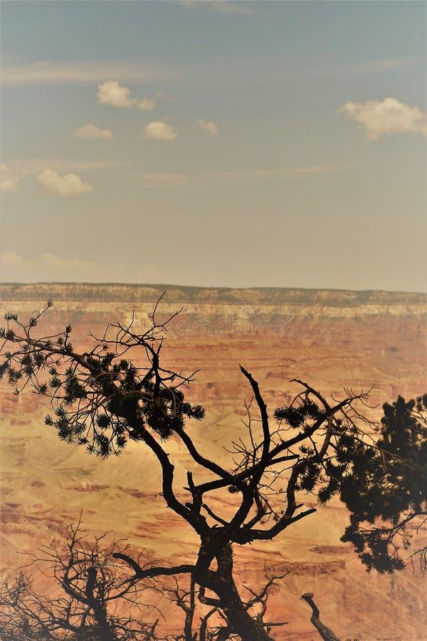 Tusen dollar Canyon-21 fotografering för bildbyråer