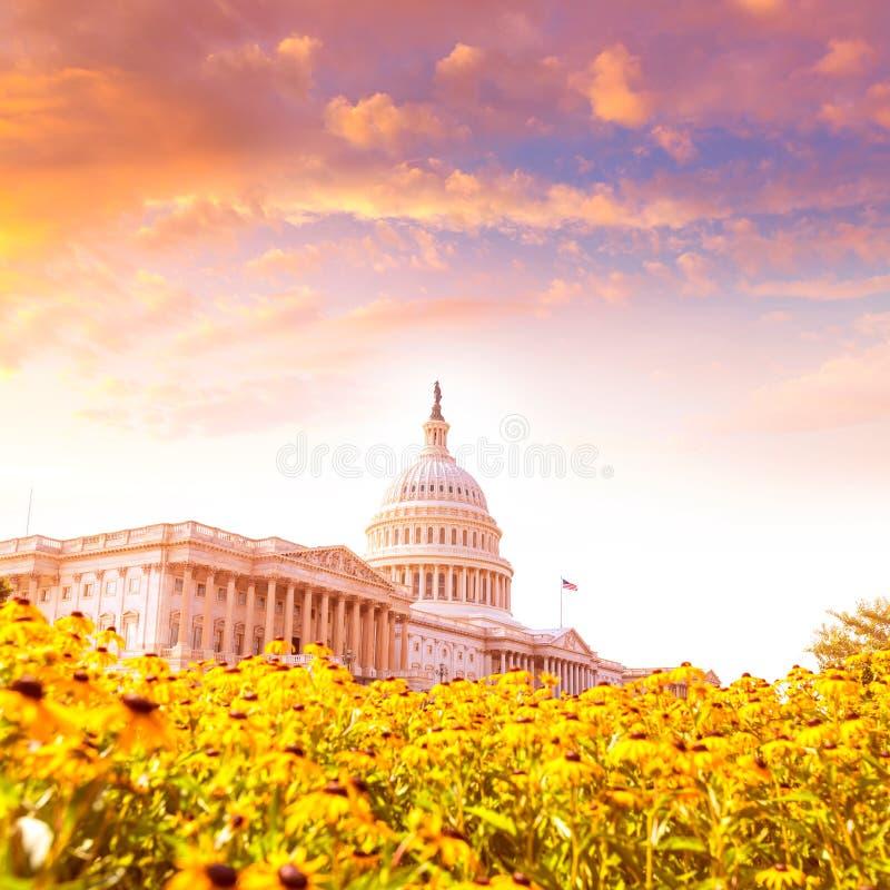 Tusenskönan för KapitoliumbyggnadsWashington DC blommar USA royaltyfria bilder