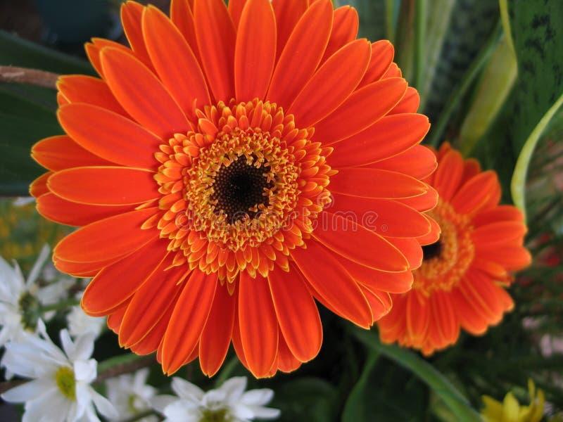 Download Tusenskönor fotografering för bildbyråer. Bild av blomma - 33021