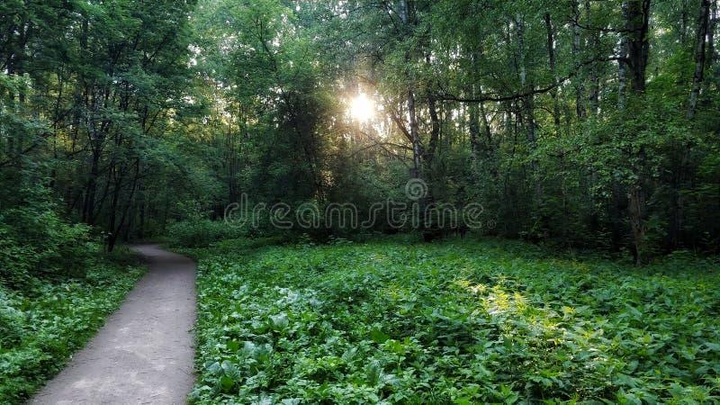 Tushino park moscow stock photo