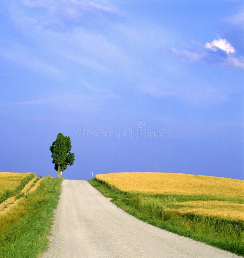 Tuskany-Landschaft mit kleinem Straßen- und Zypressenbaum lizenzfreie stockbilder