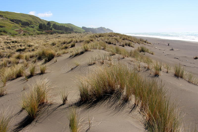 Tussock blowing in the wind west coast beach royalty free stock photos