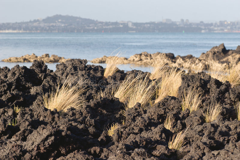 Download Tussock And Lava Royalty Free Stock Photos - Image: 4291928