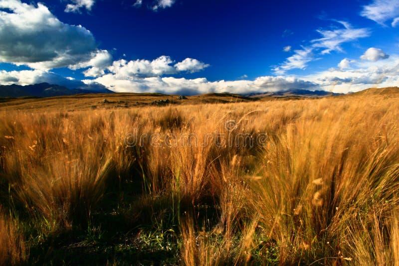 Tussock in vento fotografie stock libere da diritti