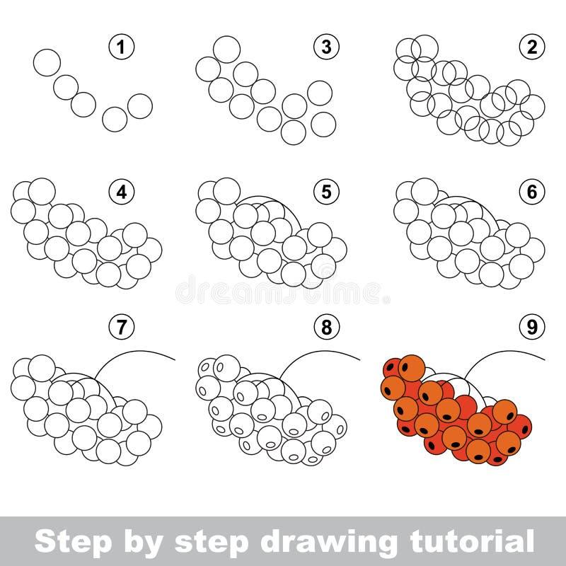 Tutorial del dibujo Serbal rojo stock de ilustración