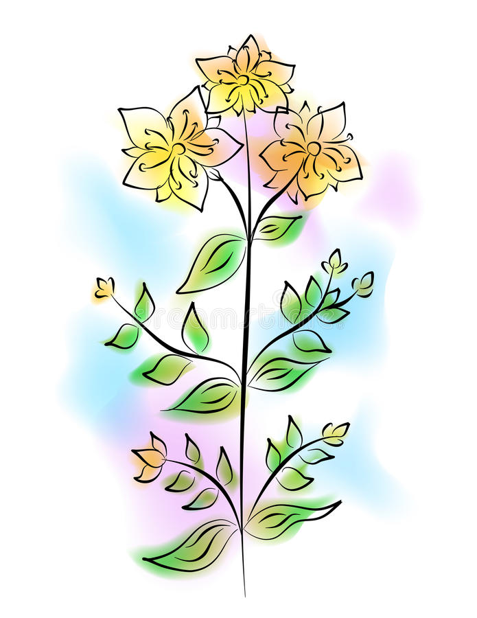 The tutsan flower royalty free illustration