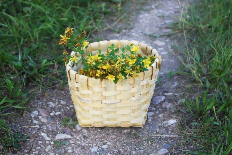 Download Tutsan gulingblommor fotografering för bildbyråer. Bild av blankt - 78726305