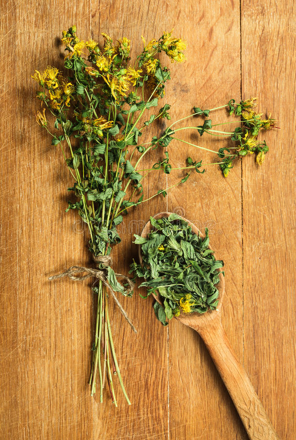 Tutsan Herbes sèches Phytothérapie, médicinal phytotherapy elle photo stock