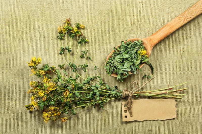 Tutsan Herbes sèches Phytothérapie, médicinal phytotherapy elle image libre de droits