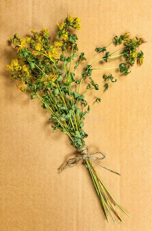 Tutsan Herbes sèches Phytothérapie, médicinal phytotherapy elle photographie stock