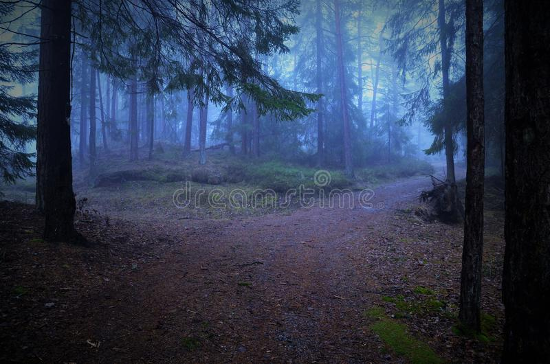 Tvärgata i dimmig skog i höst arkivbild