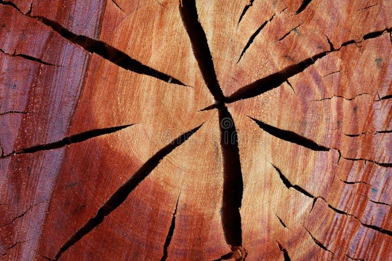 Tvärsnitt av den klippta trädstammen royaltyfri fotografi