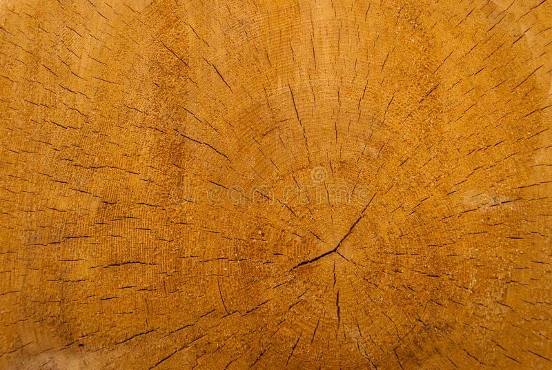 Tvärsnitt av den prydliga stammen, med årliga cirklar och sprickor Trä texturerar royaltyfri bild
