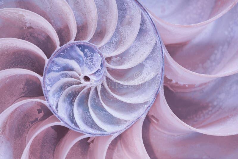 Tvärsnitt av ett Nautilusskal i pastellfärgade färger royaltyfri fotografi