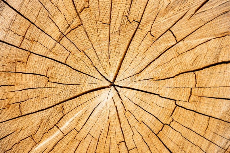 Tvärsnitt av trä med sprickor fotografering för bildbyråer