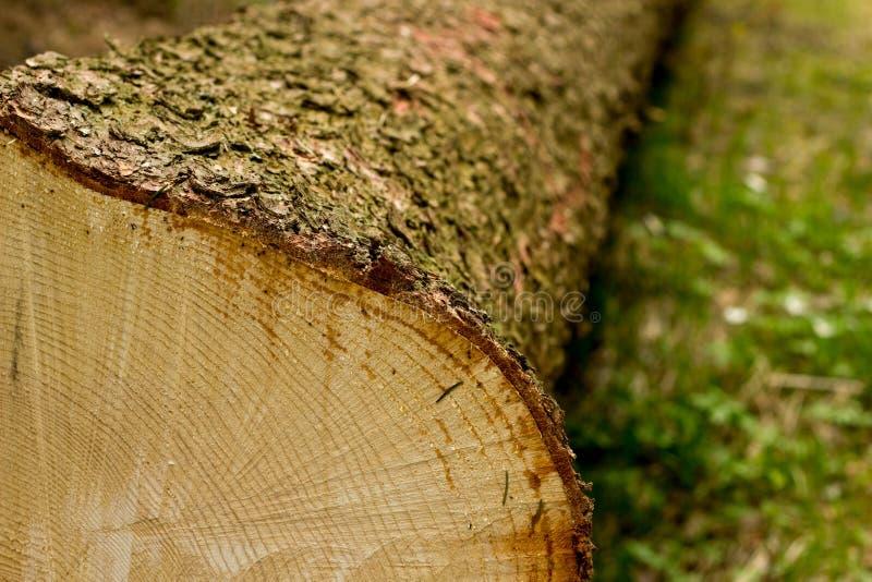 Tvärsnitt av treen royaltyfri fotografi