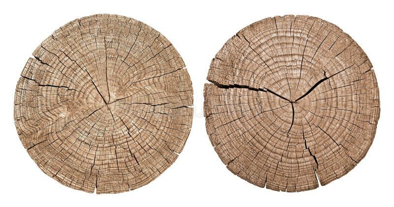 Tvärsnitt av treestammen royaltyfria foton